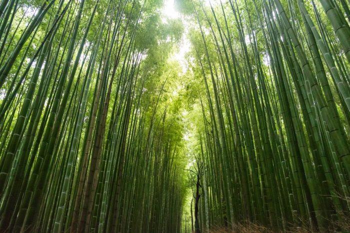 hall bamboo